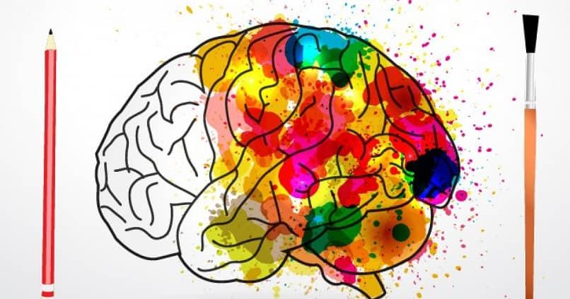 lapices dibujar cerebro lleno colores