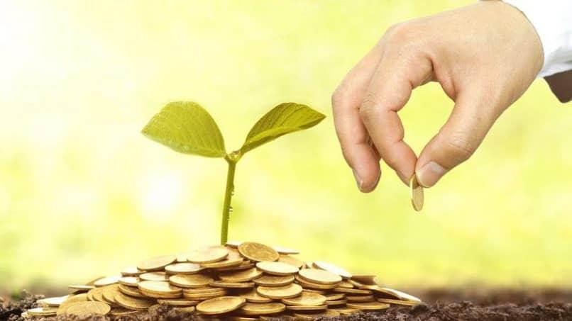 persona empresas dar dinero crecer planta ambiente