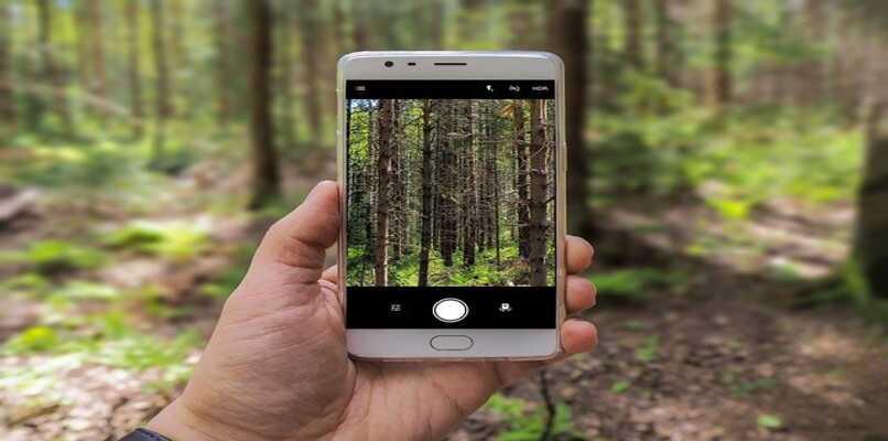 persona tomando foto bosque